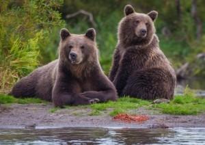 Land of Bears