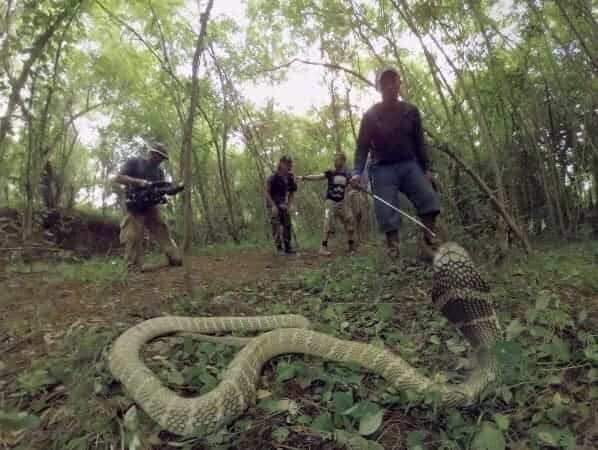 Dominic Monaghan waving from just beyond a real wild King Cobra on Cream360's Wild Things